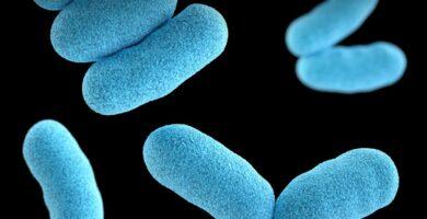 que son los alimentos probióticos